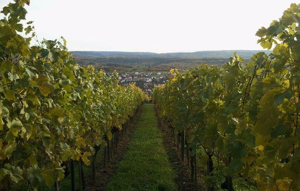 weinseminar-straubenhardt-weinberg