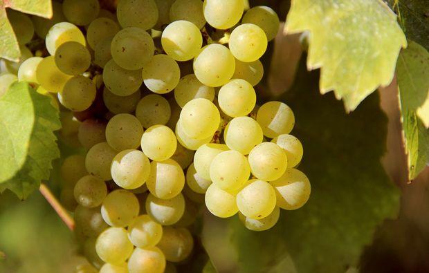 weinbergsrundfahrt-guldental-trauben