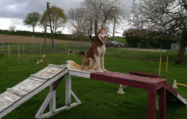 schlittenhundefahrt-goch-zwei