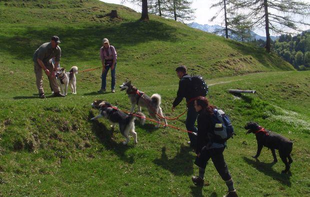 husky-abenteuer-trip-clausthal-zellerfeld-wandern
