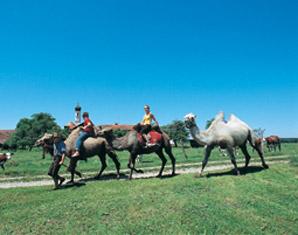 erlebnis-kamel-trekking