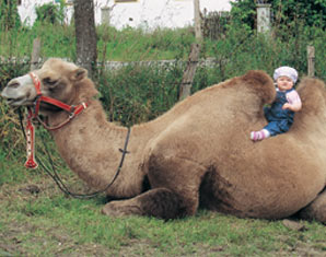 valley-kamel-trekking