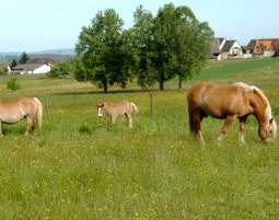 4-zauberhafte-unterkunft-baarblick-donaueschingen