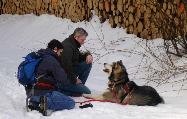 husky-abenteuer-trip-heinade-abenteuer