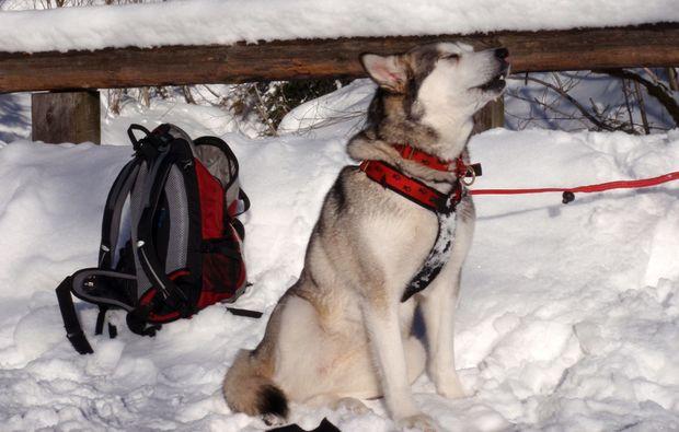 husky-abenteuer-trip-heinade-freizeitabenteuer