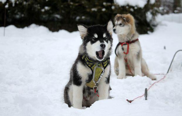 husky-abenteuer-trip-heinade-natur