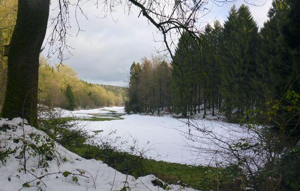 husky-abenteuer-trip-heinade-wald