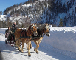 Pferdeschlittenfahrt ca. 3,5 Stunden