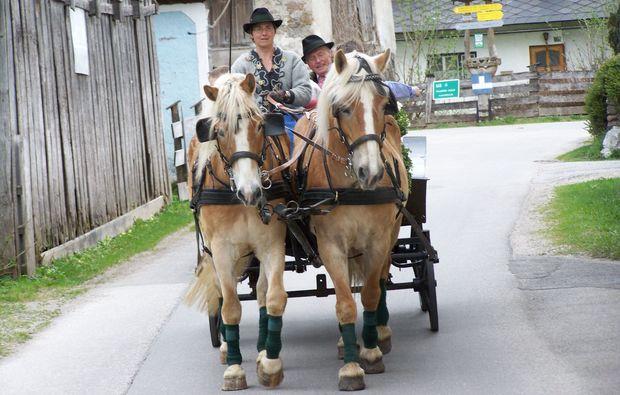 pferdeschlittenfahrt-wildalpen-stadt