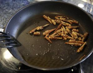 Insekten Kochkurs - Berlin Insekten-Kochkurs
