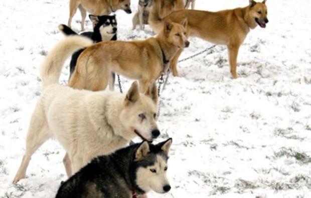 huskytour-mitfahrt-hunde-neuhof-hauswurz