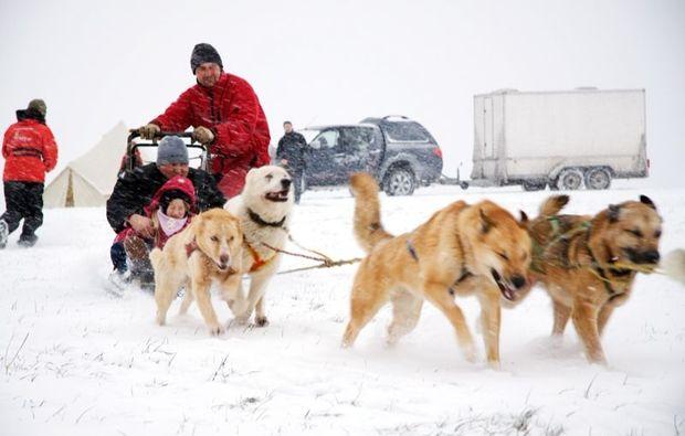 huskytour-mitfahrt-musher-neuhof-hauswurz