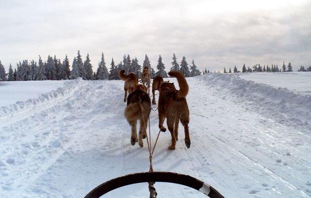 huskytour-mitfahrt-natur-neuhof-hauswurz