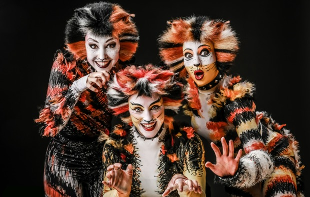 musical-dinner-muenster-cats