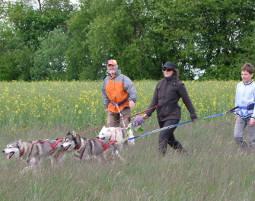 husky-race-workshop1338823920