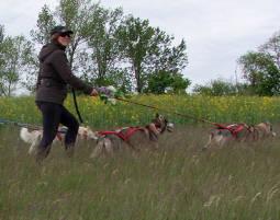 husky-race-workshop2