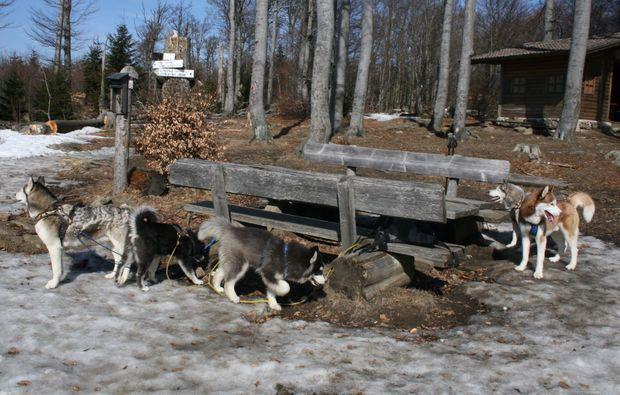 huskyrudel-trekking-kollnburg