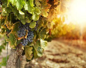 Weinseminar Grafschaft
