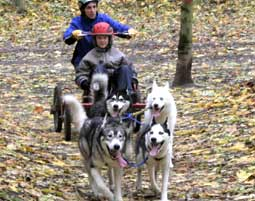 Schlittenhunde-Fahrt Erlebnis-Tour in Huy - 2,5 Stunden