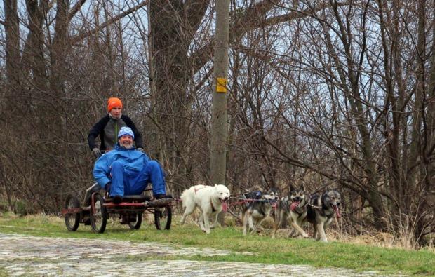 schlittenhundefahrt-halberstadt-hunde