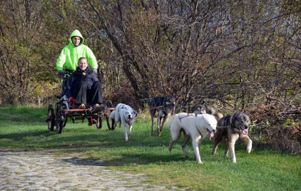 schlittenhundefahrt-halberstadt-hundefahrt