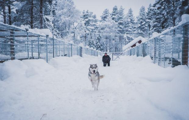 abenteuer-trip-arvidsjaur-husky