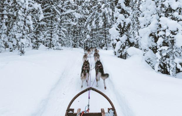 abenteuer-trip-arvidsjaur-huskytour