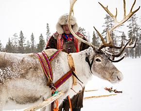 Winterwonderland 1 Pax 3 ÜN Lappland - Arvidsjaur Huskytour, Eisfischen, Schneeschuhwanderung, Rentiererlebnis – 4 Tage