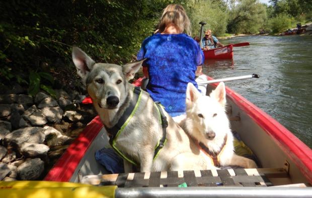 husky-trekking-bueren-bg3