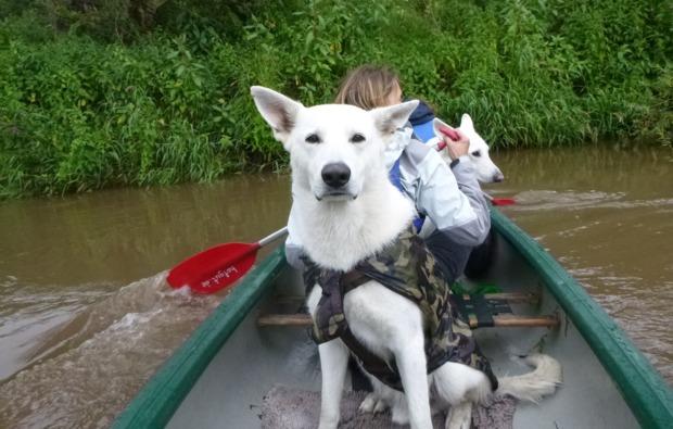 husky-trekking-bueren-bg5