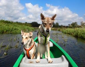 Husky-Trekking Büren