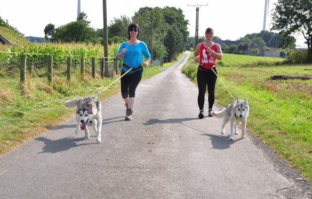 hunde-trekking-goch