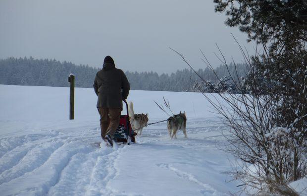 schlittenhundefahrt-kulz-fahrt