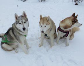 Schlittenhundetour für Zwei - Kulz Ca. 2,5 Stunden