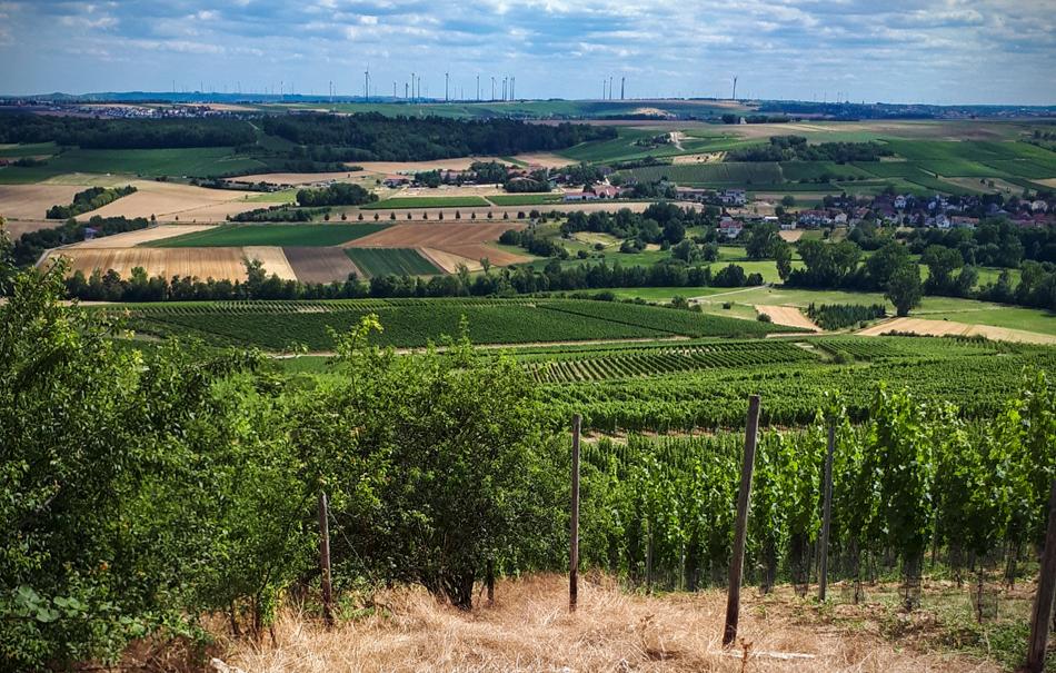 weinbergwanderung-essenheim-bg21632903668