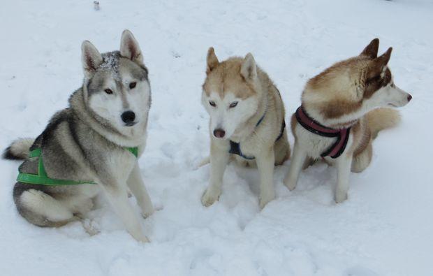husky-trekking-kulz-paar