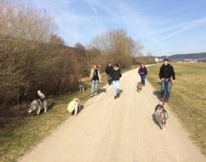 Huskytrekking - 2 Stunden - Dietfurt Kleine Wanderung - 2 Stunden