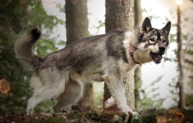 husky-trekking-dietfurt-spazieren