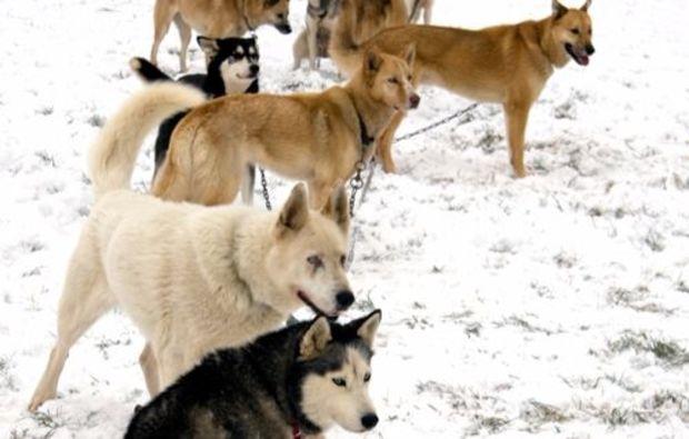 schlittenhunde-workshop-neuhof-hauswur-winter-erlebnis