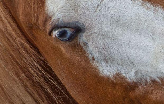 fotokurs-berlin-pferde