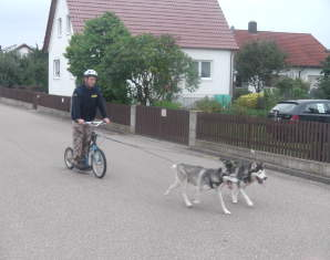 erlebnis-dog-scooter