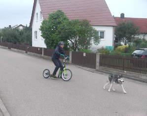 husky-scooter-erlebnis