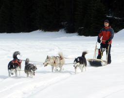 Schlittenhunde-Kurs Schlittenhundekurs und Trekking Tour - 5 Stunden