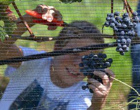 Turismo e vino Agriturismo il Roccolo - Weingut-Besichtigung, Weinprobe