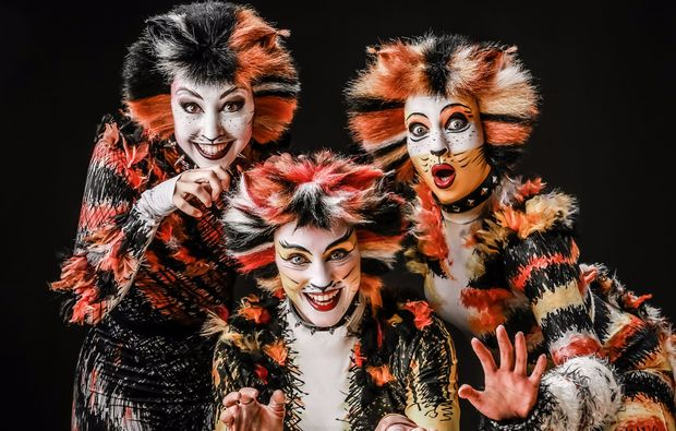 musical-dinner-stralsund-cats