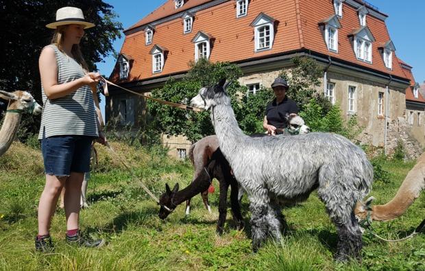 lama-alpakawanderung-wermsdorf-bg4