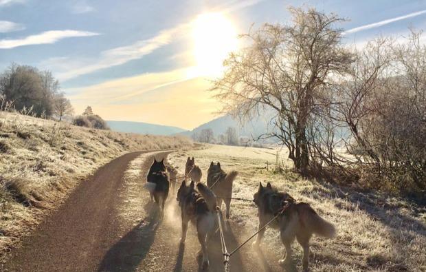 schlittenhunde-workshop-dietfurt-atemberaubend