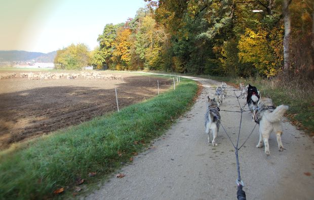schlittenhunde-workshop-dietfurt-natur