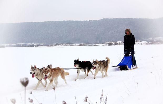 schlittenhunde-workshop-dietfurt-schlitten-fahren