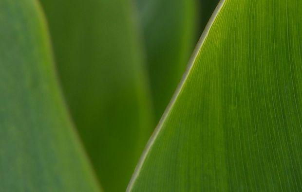 fotokurs-hannover-green
